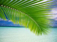 Beach-Palm-Green-Leaf-wallpaper-wp5603248