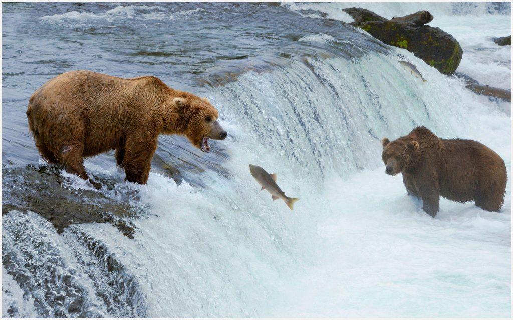 Bear-Hunting-Fish-bear-hunting-fish-1080p-bear-hunting-fish-desktop-wallpaper-wp3402969
