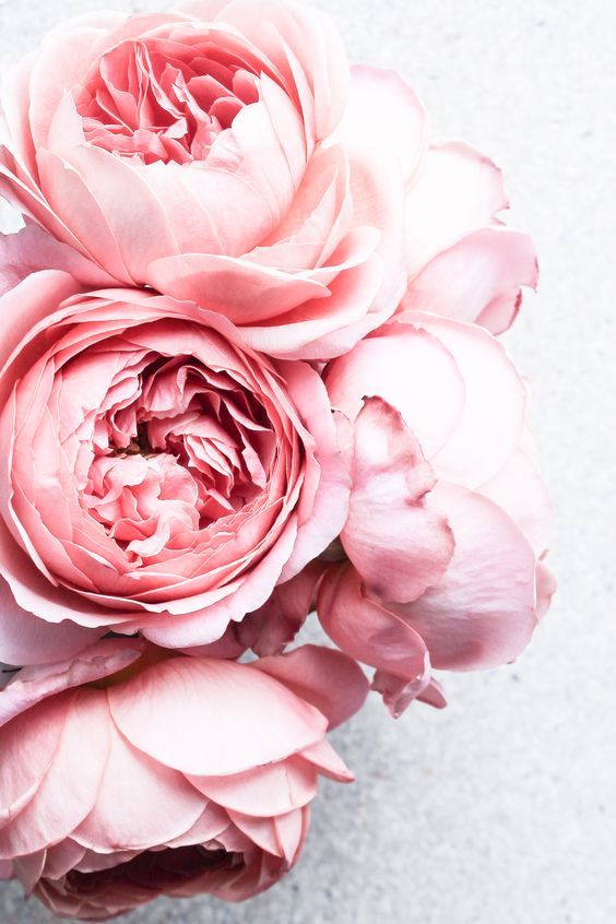 Beautiful-Flowers-wallpaper-wp5005121
