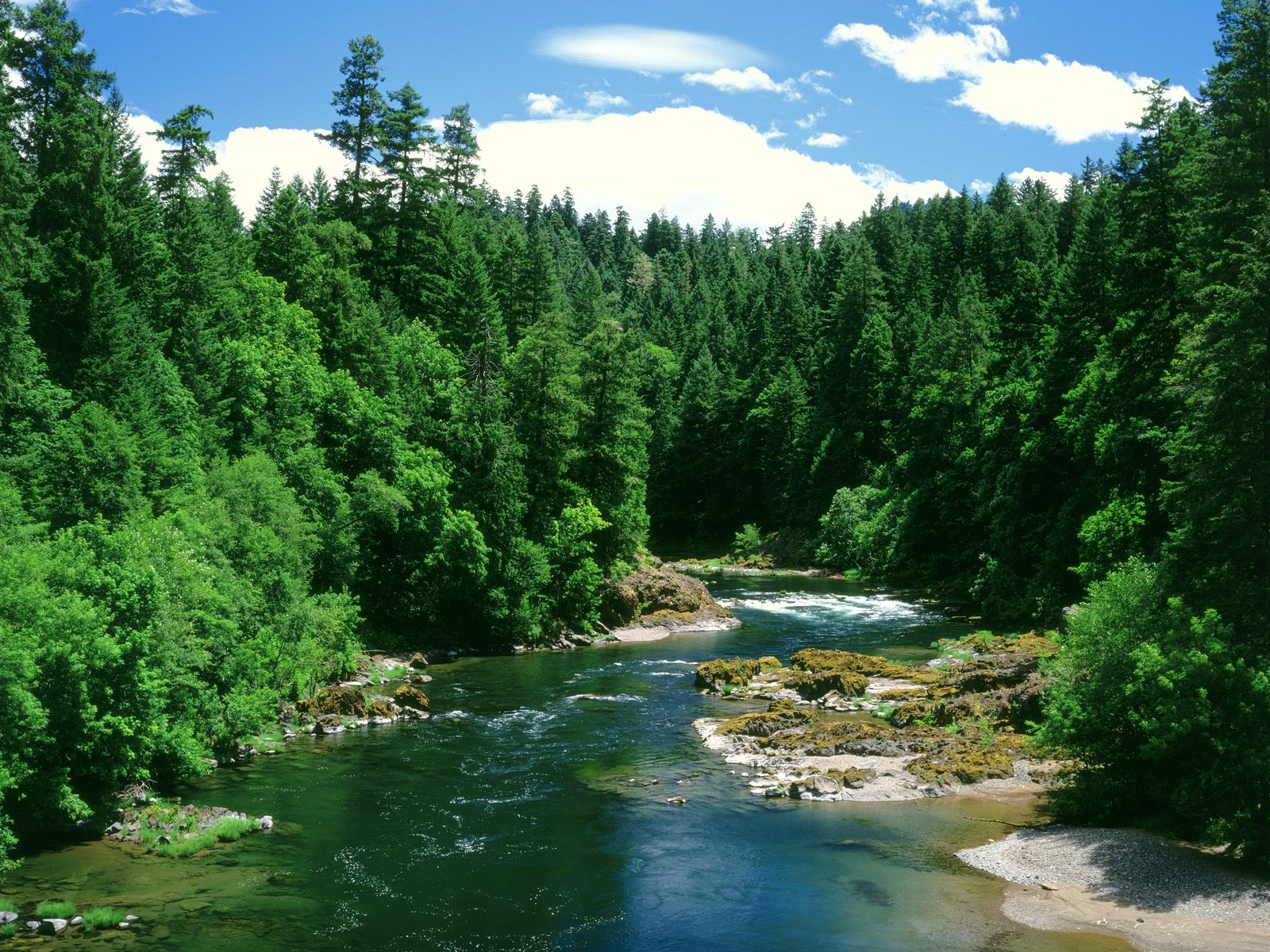 Beautiful-Forest-Rivers-Beauty-Places-wallpaper-wp3403005