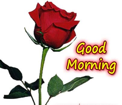 Beautiful-Good-Morning-Ecard-with-rose-flower-wallpaper-wp423982