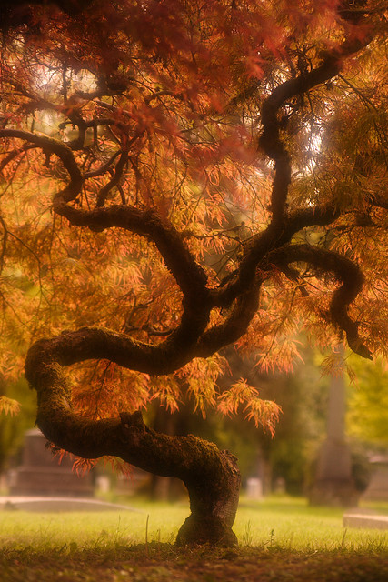 Beautiful-Nature-amazing-tree-wallpaper-wp4404973
