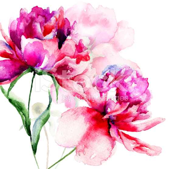Beautiful-Peony-flowers-royalty-free-stock-illustration-wallpaper-wp3003557