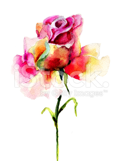 Beautiful-Rose-flower-royalty-free-stock-illustration-wallpaper-wp3003560