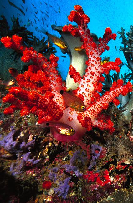 Beautiful-Under-Sea-Animals-desktop-Download-a-wallpaper-wp3003570