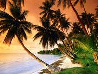 Beautiful-beach-palm-trees-on-sunset-wallpaper-wp5603266