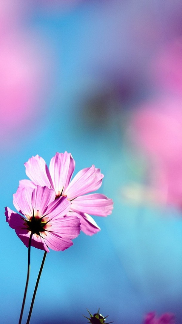 Beautiful-flowers-in-full-bloom-Android-phone-1080x1920-wallpaper-wp3403002