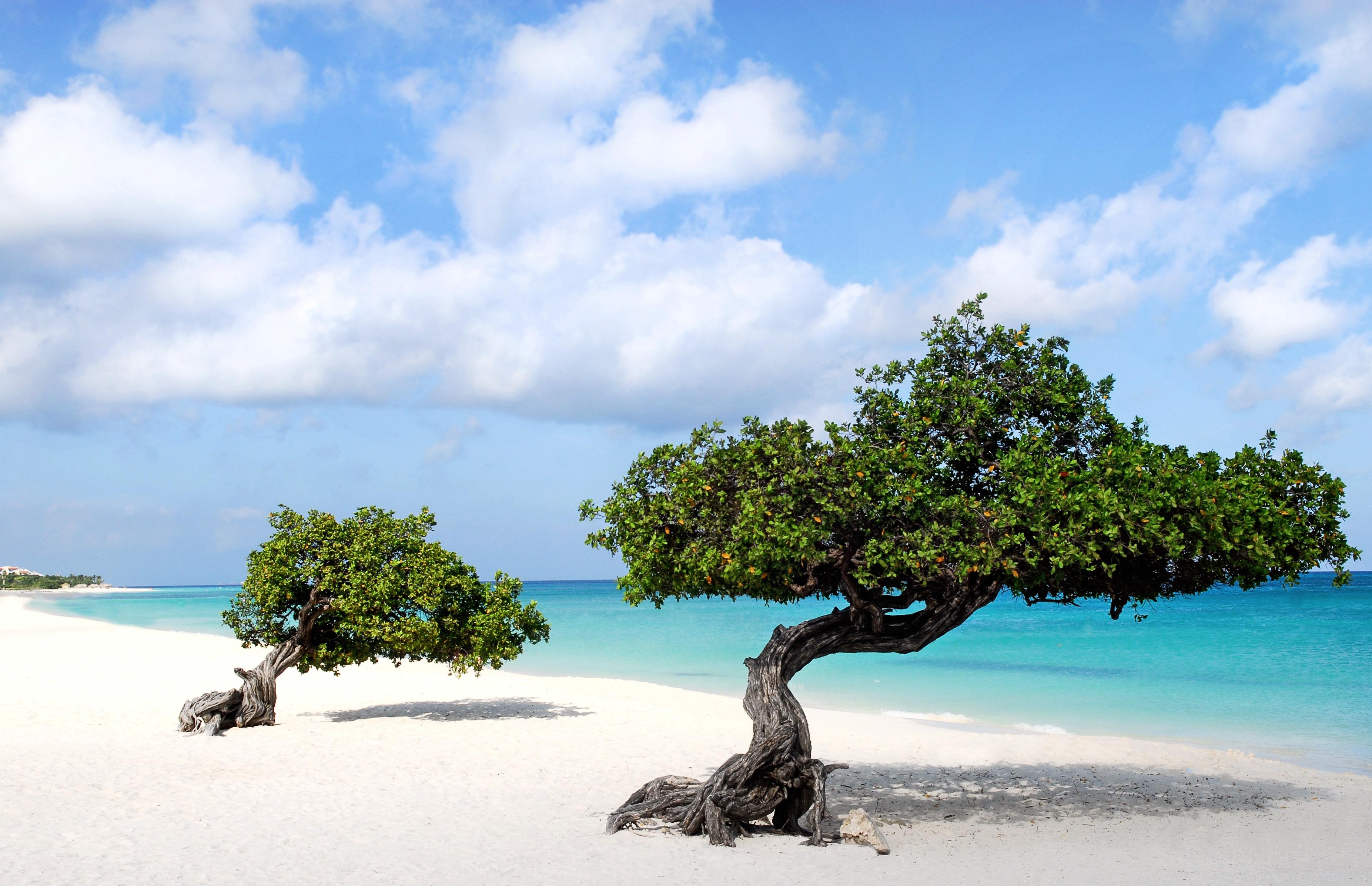 Beautiful-of-Divi-trees-in-Aruba-island-wallpaper-wp5603296