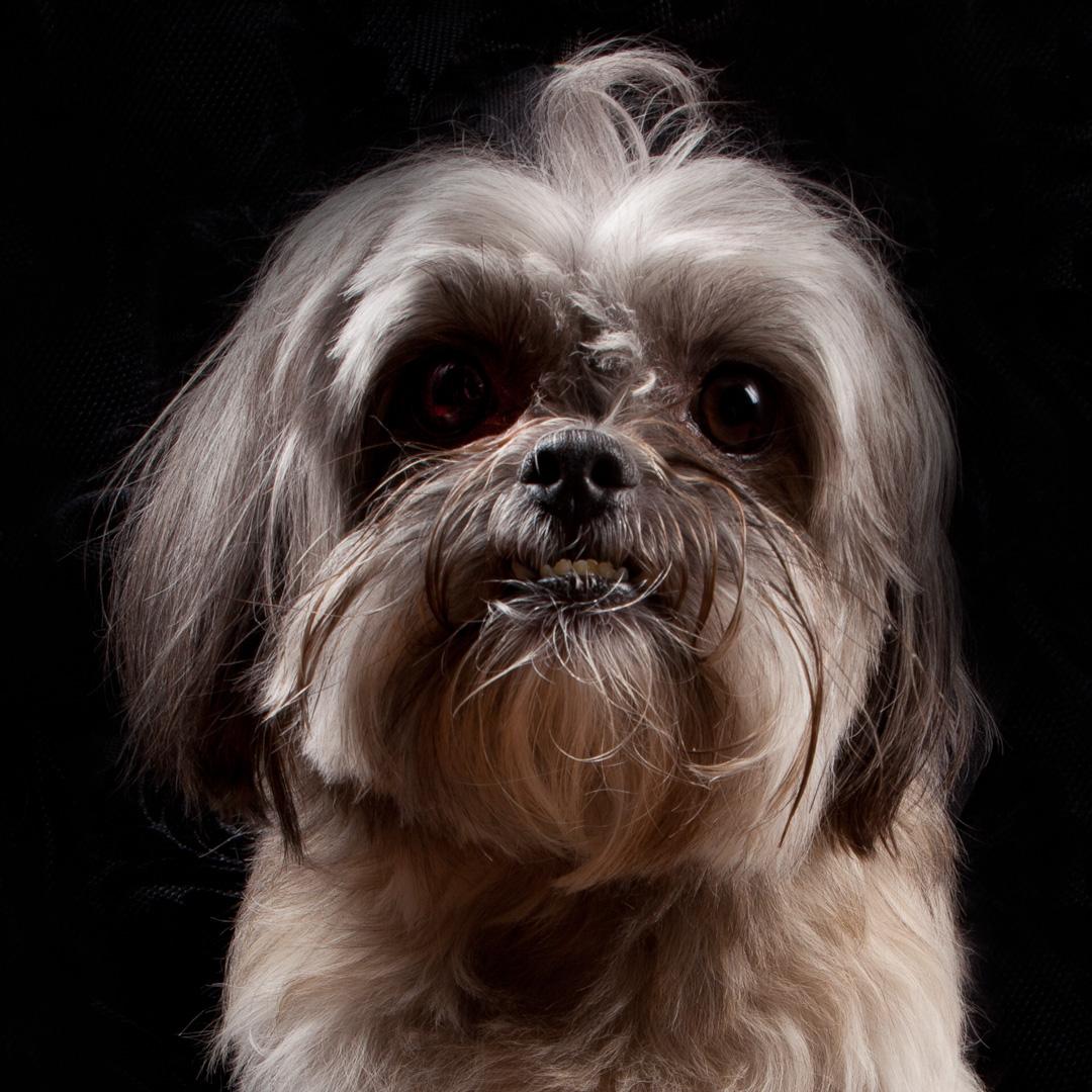 Beautiful-puppy-wallpaper-wp5603291