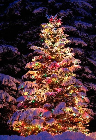Beautiful-tree-outdoors-with-snow-wallpaper-wp4404982