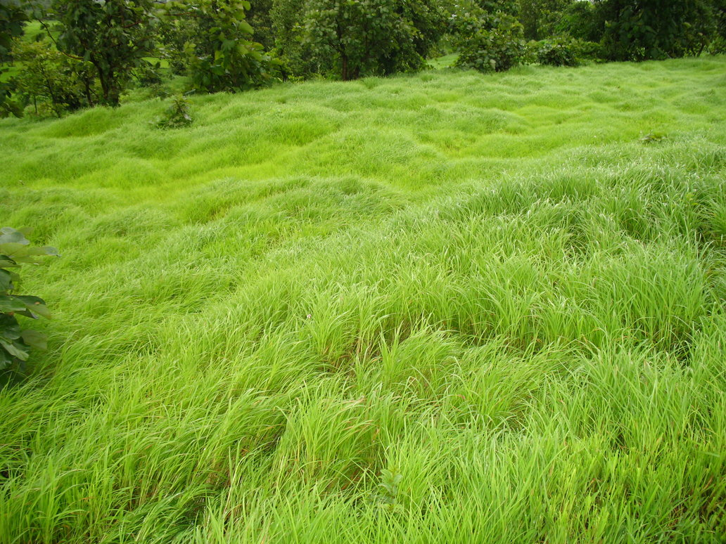Bed-Of-Green-Grasses-wallpaper-wp5403644