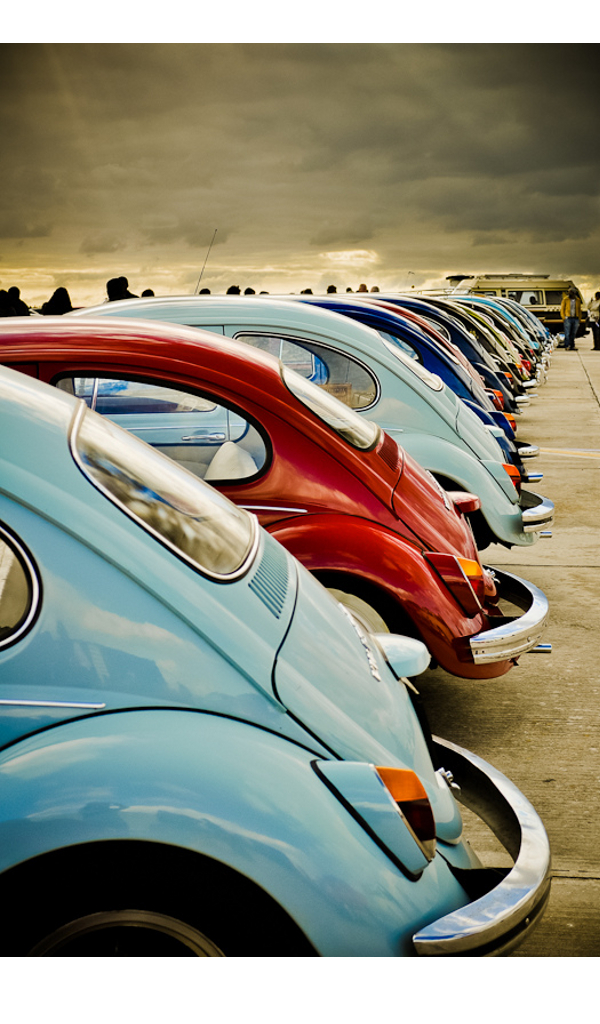 Beetles-wallpaper-wp4604157