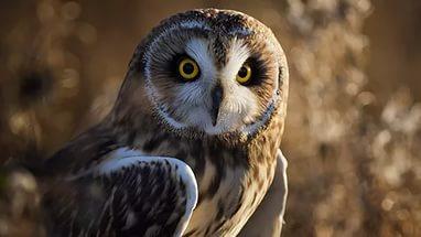 Bird-Predator-Owl-Nature-1920x1080-Desktop-for-apple-wallpaper-wp3403250