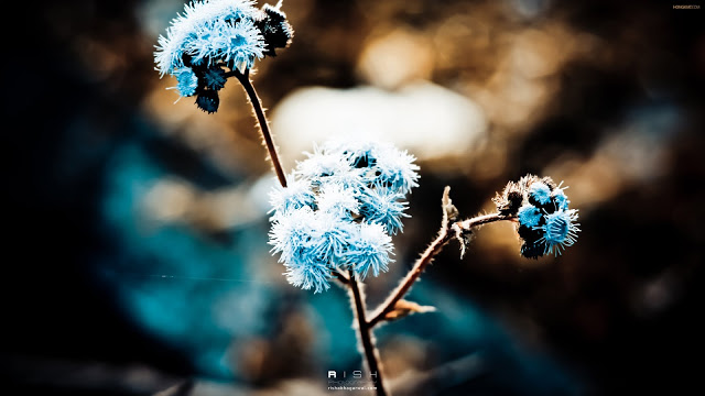 Blue-Dandelion-HD-wallpaper-wp3603515