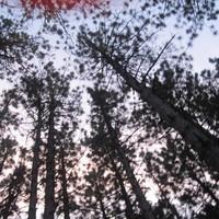 Bon-Iver-Woods-Zeds-Dead-Remix-by-ravesquirrel-on-SoundCloud-wallpaper-wp4405271