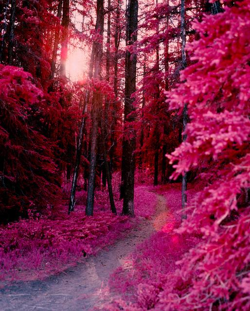Breathtaking-Pink-wallpaper-wp4604412-1