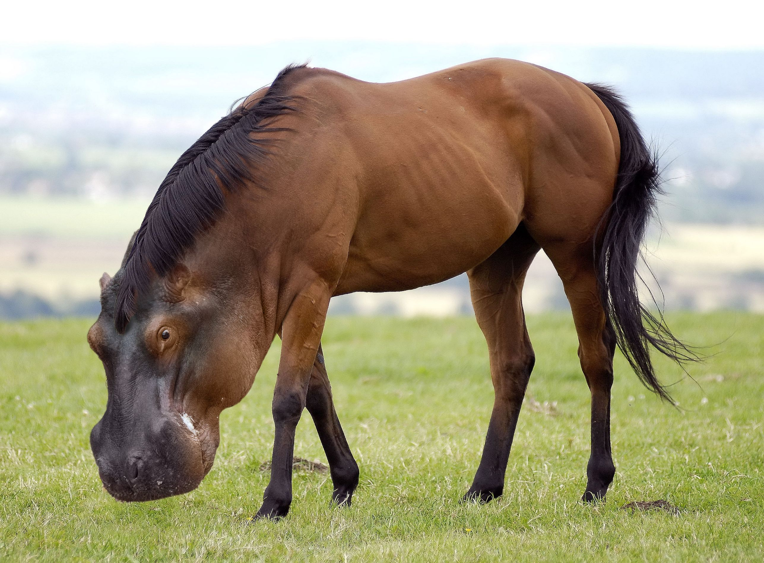 Brown-with-Black-Mane-Horse-Has-Science-Gone-Too-Far-Or-Not-Far-Enough-Visit-for-more-Hy-wallpaper-wp4405374