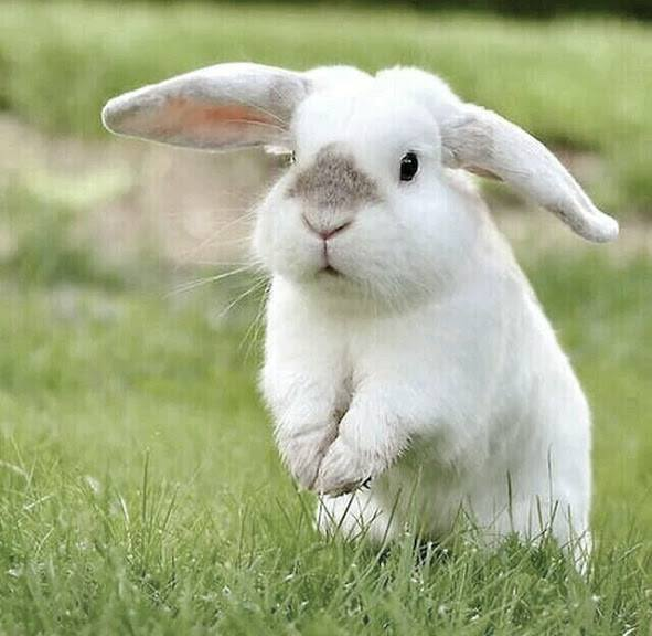Bunnies-were-born-to-bounce-freely-wallpaper-wp4804937