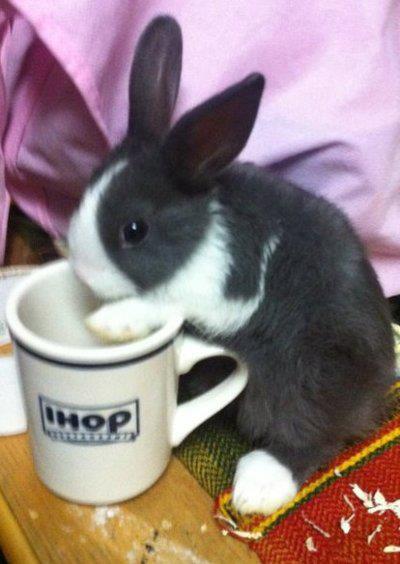 Bunny-humor-wallpaper-wp4804938