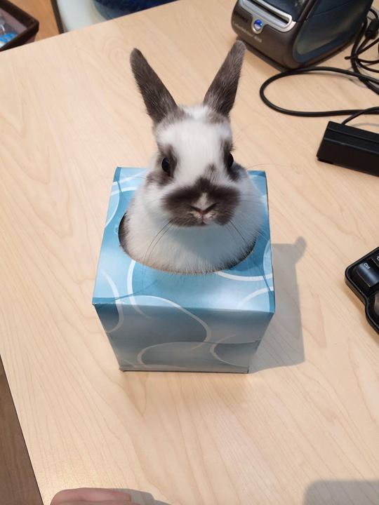 Bunny-in-a-box-so-much-better-than-Jack-in-a-box-wallpaper-wp4804939