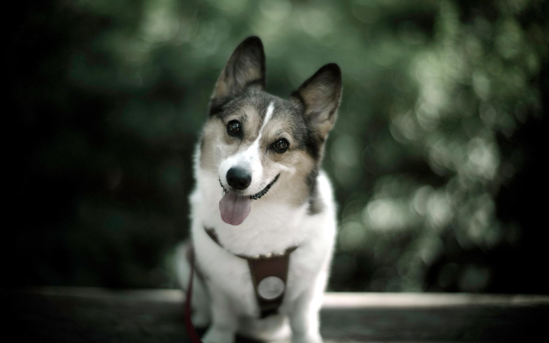 CUTE-DOG-wallpaper-wp5604145