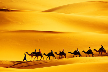 Camels-in-Desert-wallpaper-wp4805063