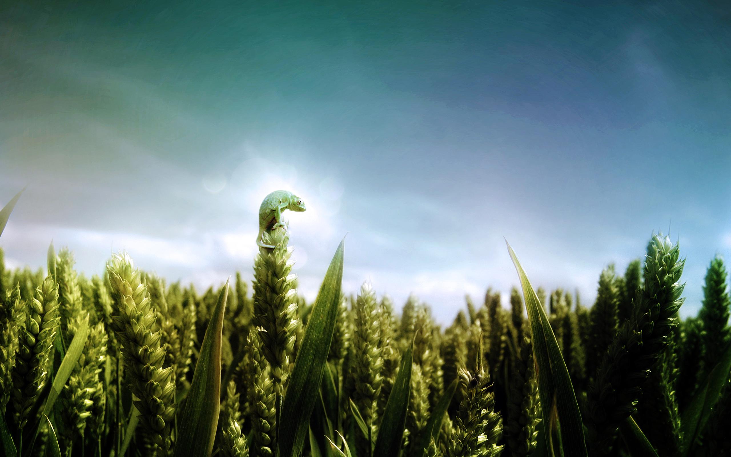 Chameleons-Fields-Skyscapes-wallpaper-wp424435-1