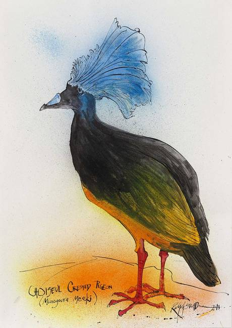 Choiseul-Crested-Pigeon-Ralph-Steadman-wallpaper-wp5205183