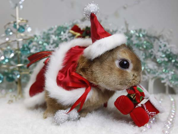 Christmas-Animals-wallpaper-wp520222