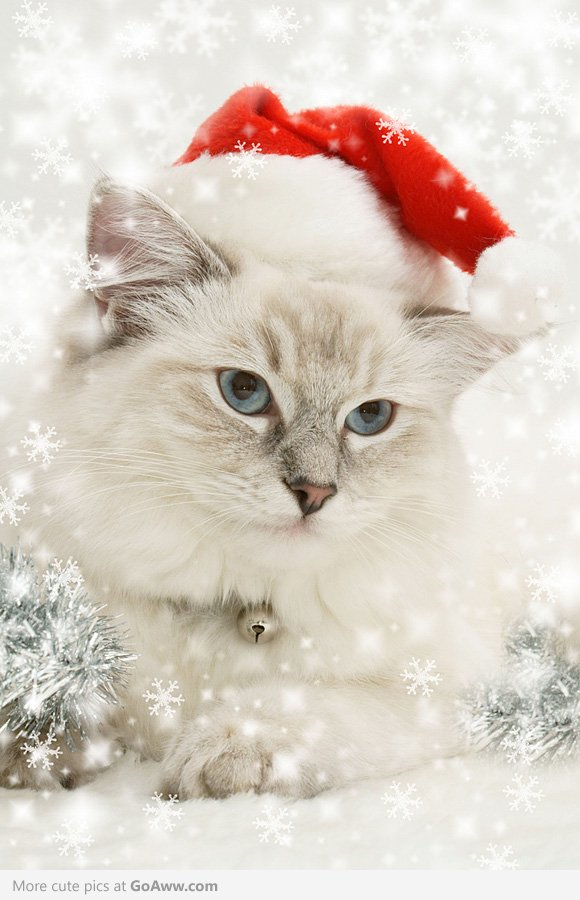 Christmas-Cat-goaww-com-wallpaper-wp5205217