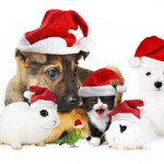 Christmas-Clip-Art-Pictures-wallpaper-wp5205223