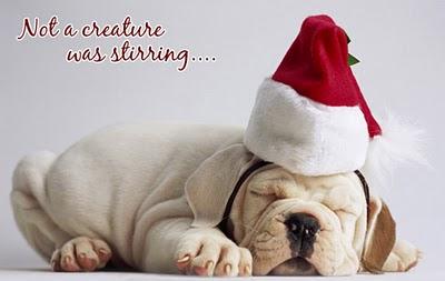 Christmas-Puppy-wallpaper-wp560117