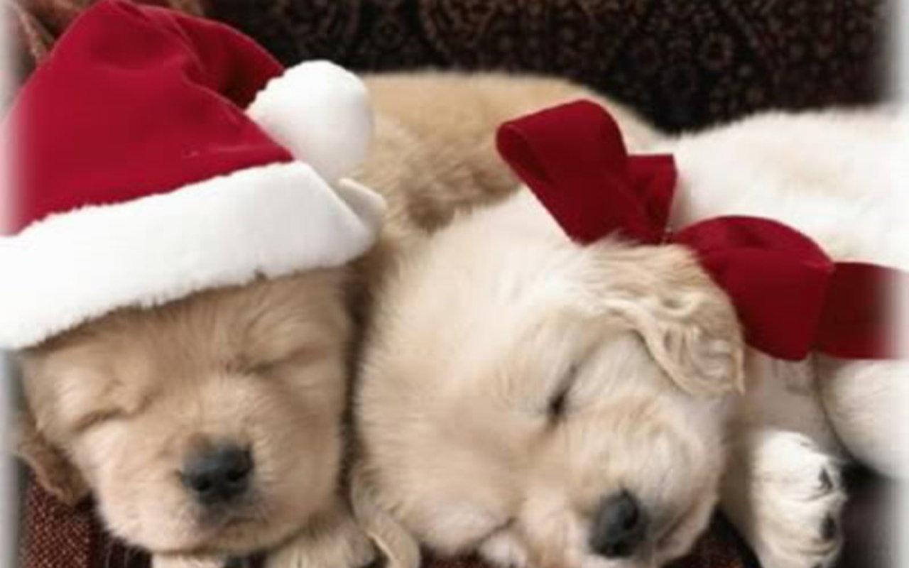 Christmas-Puppy-wallpaper-wp5603885