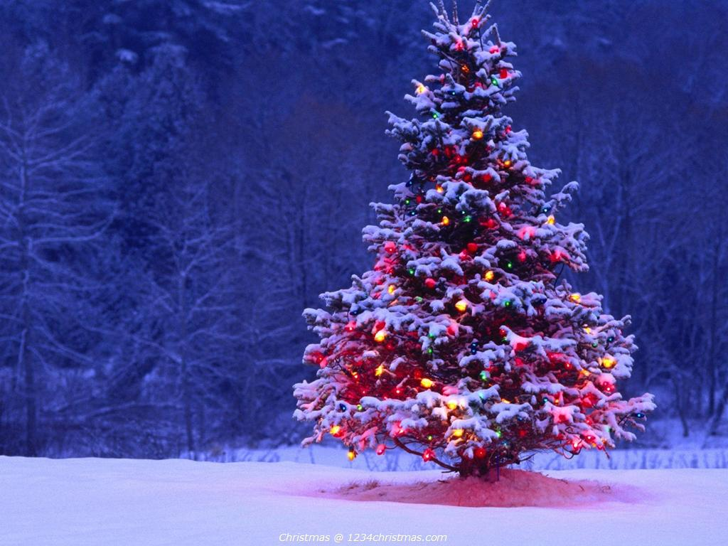 Christmas-Tree-Desktop-Wallpaper-wallpaper-wp4805291