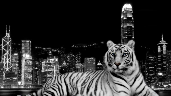 City-Dark-Tiger-wallpaper-wp6002710