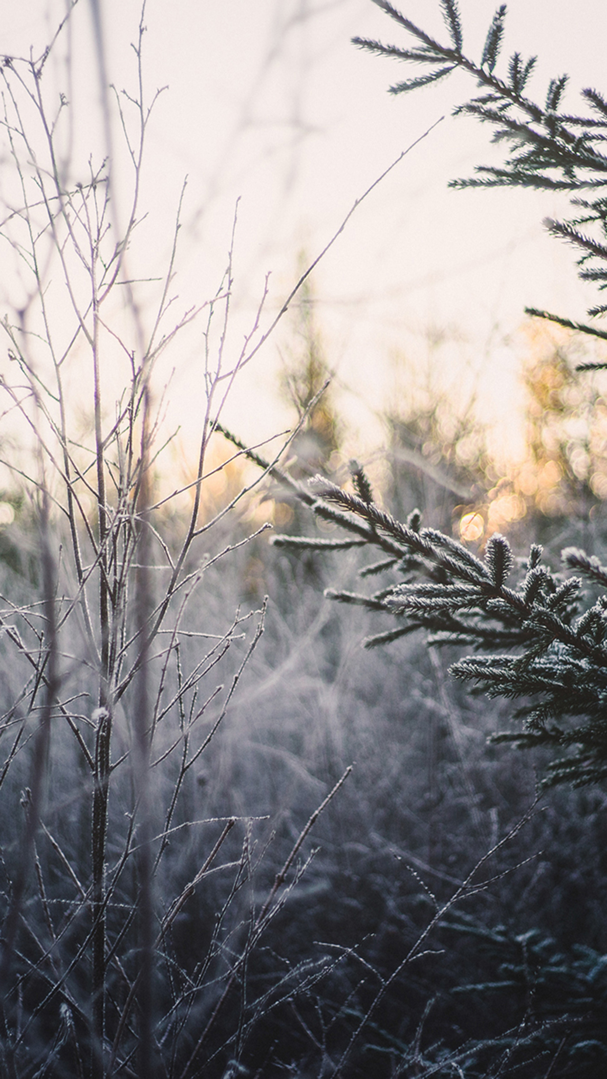 Cold-Frosted-for-iPhone-wallpaper-wp5003601