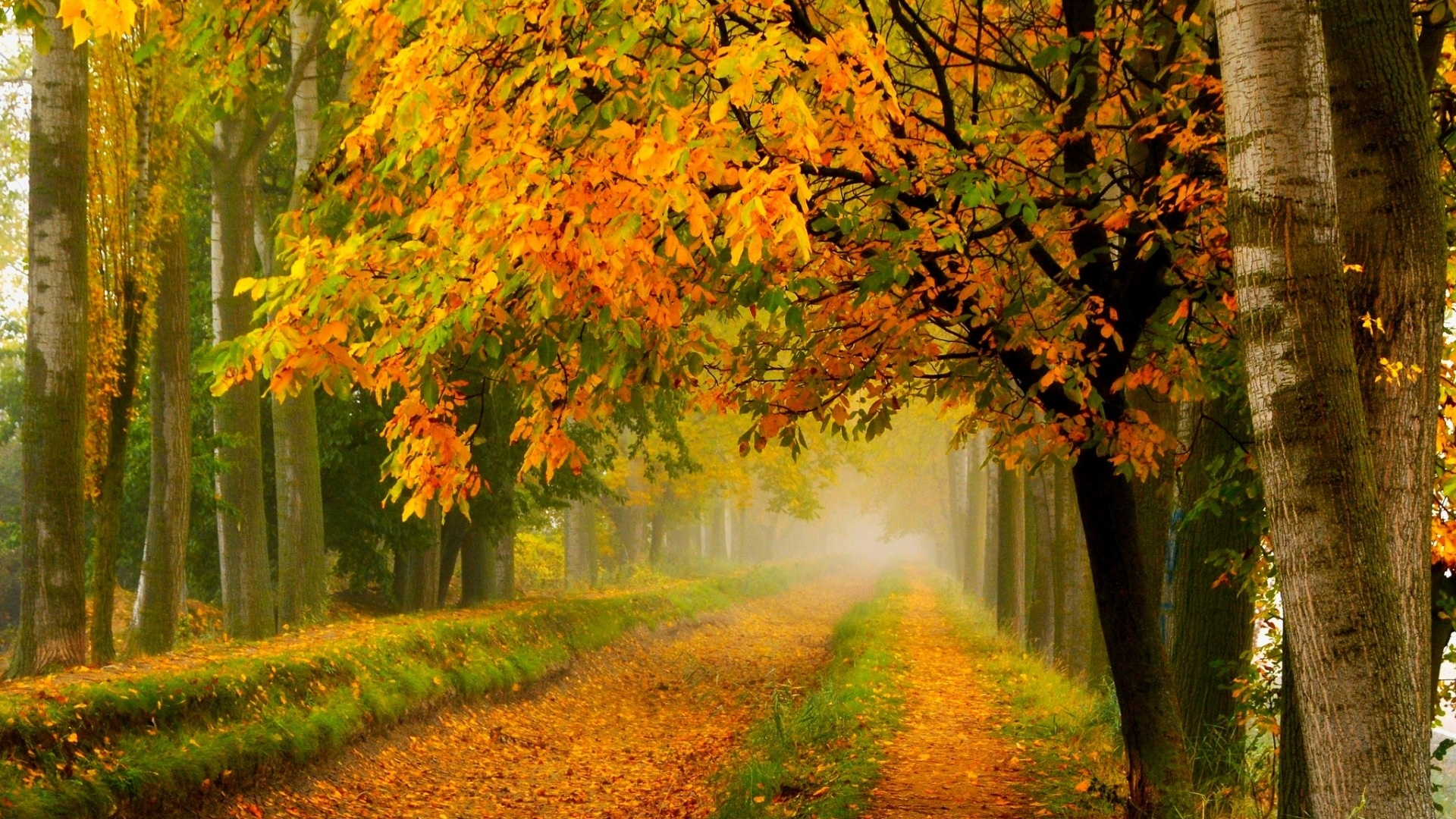 Colorful-Autumn-Fall-Forest-Park-1920-x-1080-Need-iPhone-S-Plus-Backgro-wallpaper-wp3404029