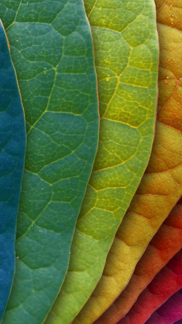 Colorful-Leaves-wallpaper-wp4405935