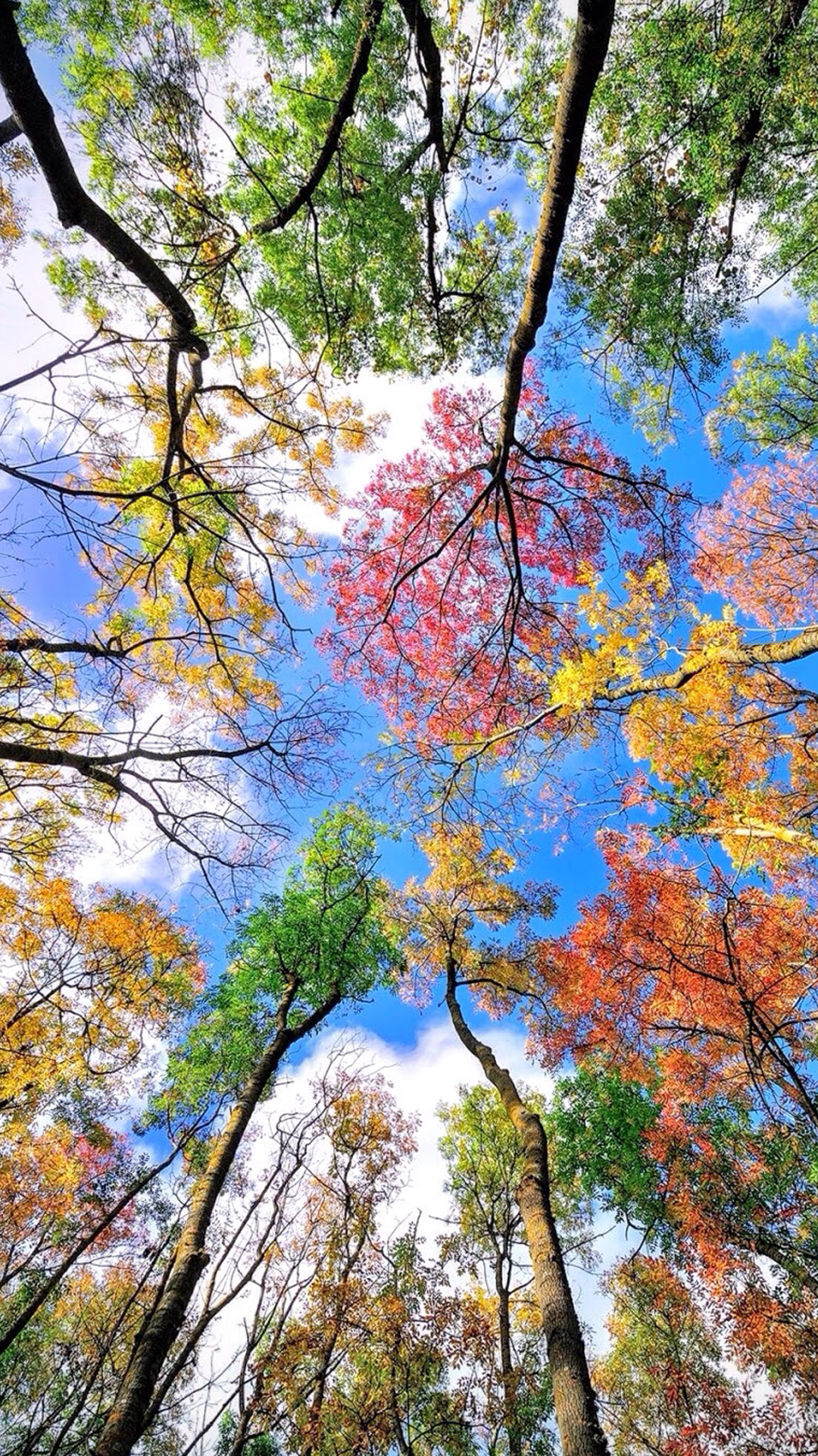 Cool-Phone-with-Colorful-Trees-in-Autumn-Season-wallpaper-wp4004052