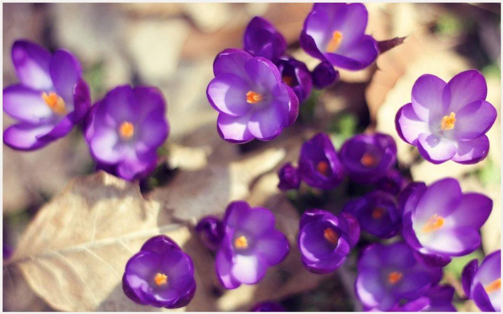 Cool-Purple-Flowers-cool-purple-flowers-1080p-cool-purple-flowers-d-wallpaper-wp3604338