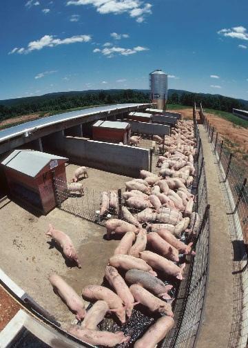 Cornucopia-Institute-Economic-Justice-for-Family-Scale-Farming-wallpaper-wp3004583