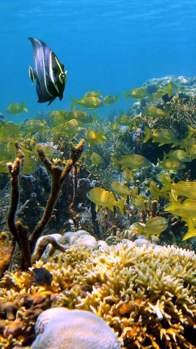Cozumel-s-amazing-underwater-world-wallpaper-wp5205403