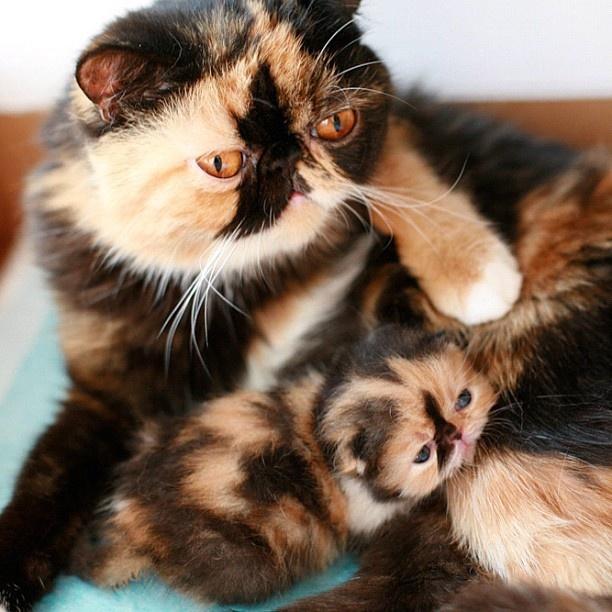 Cute-Baby-Animal-Screensavers-Cute-Baby-Animal-Screensavers-wallpaper-wp5205496