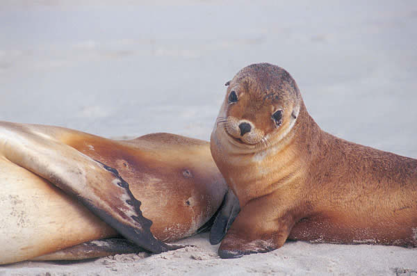 Cute-Sea-Animals-Cute-sea-animals-wallpaper-wp300648