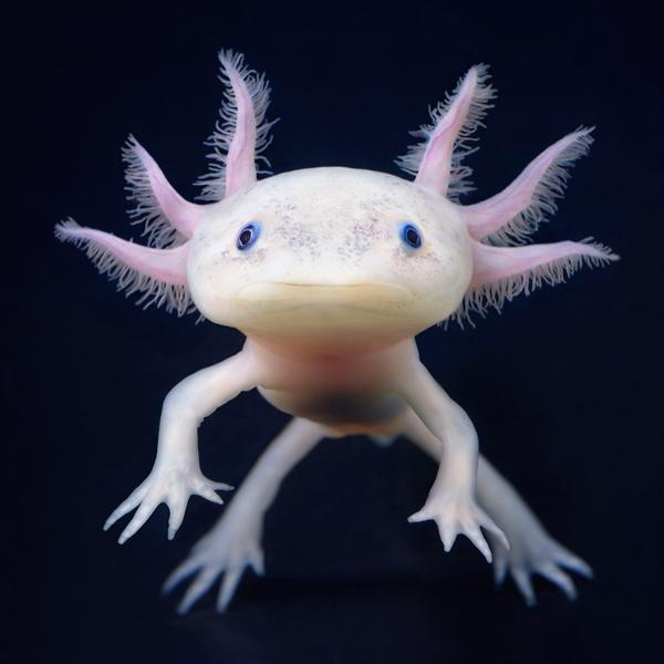 Cute-Sea-Animals-member-photos-category-animals-tags-weirdest-sea-creatures-comments-wallpaper-wp3004721