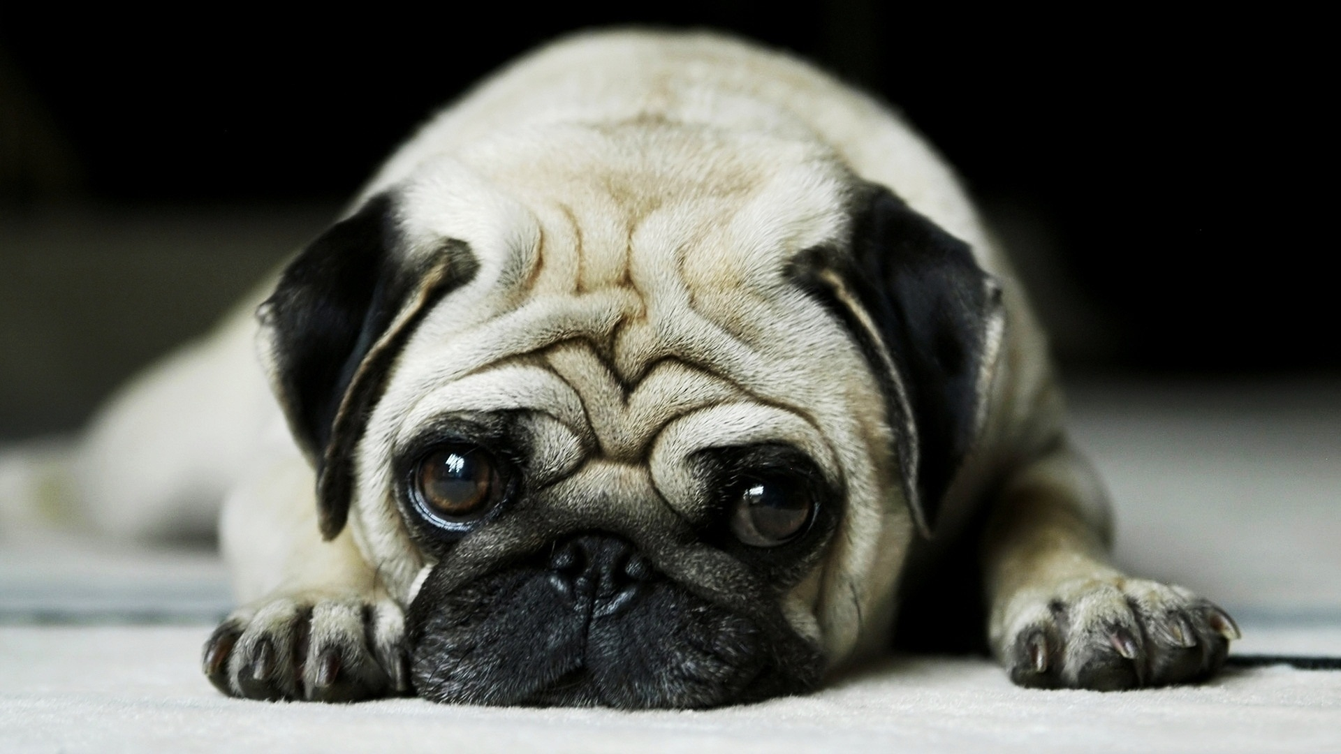 Cute-face-puppy-background-wallpaper-wp5604167