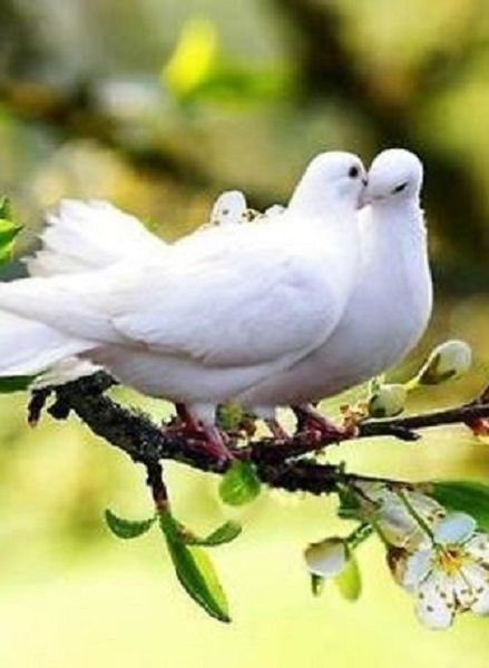 D-is-for-Doves-wallpaper-wp6002892