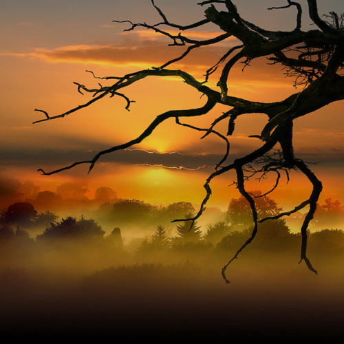 DEAD-TREE-by-RAYANDBEE-on-Flickr-wallpaper-wp5404457