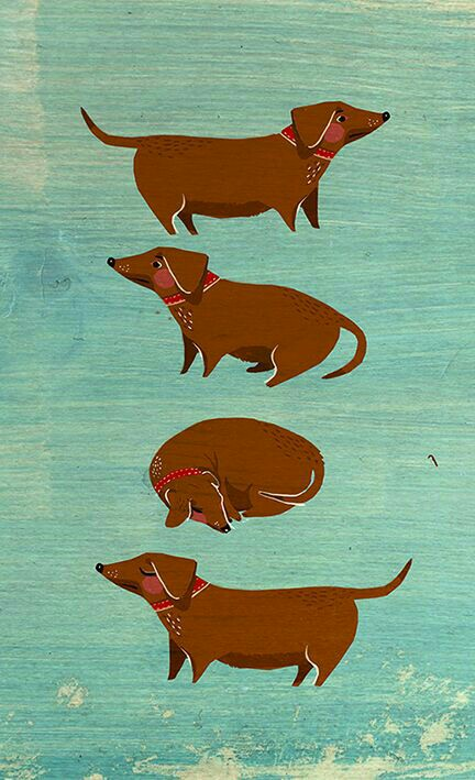 Dachshund-wallpaper-wp4002165