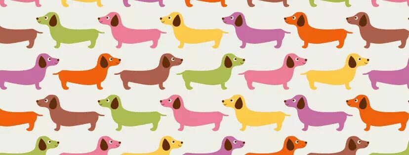 Dachshund-wallpaper-wp4002200